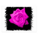El rosa oscuro colorized color de rosa en una part postal