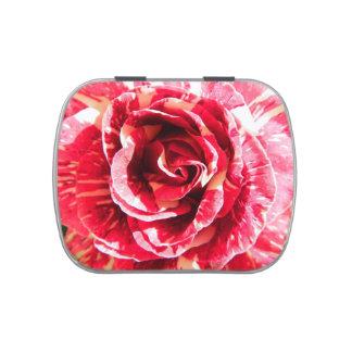 El rosa rayado rojo y blanco hermoso emplea la latas de dulces