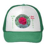 El rosa rojo crece en mi gorra del jardín