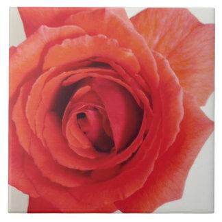 El rosa rojo de la mamá azulejo cuadrado grande