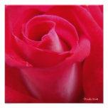 El rosa rojo del amor arte fotografico
