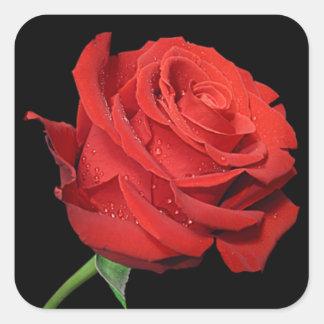 El rosa rojo florece a los pegatinas florales del pegatina cuadrada