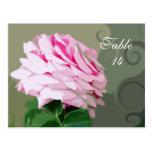 El rosa rosado remolina las postales del número de