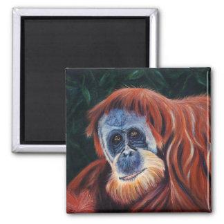 El sabio - Orangután Imán De Frigorífico
