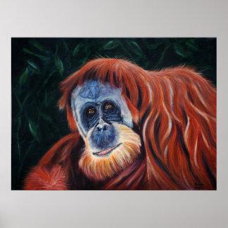 El sabio - Orangután Póster