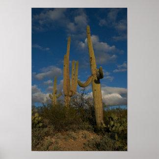 El Saguaro 3 Posters