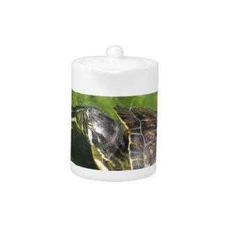 El salir acuático de la tortuga del agua