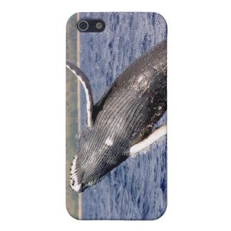 El salpicar de la ballena jorobada iPhone 5 cárcasas