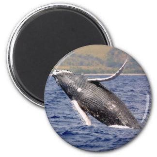 El salpicar de la ballena jorobada iman