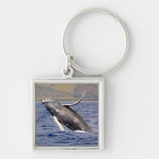 El salpicar de la ballena jorobada llaveros personalizados