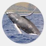 El salpicar de la ballena jorobada etiquetas redondas