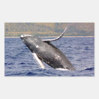 El salpicar de la ballena jorobada pegatinas
