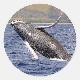 El salpicar de la ballena jorobada pegatina redonda