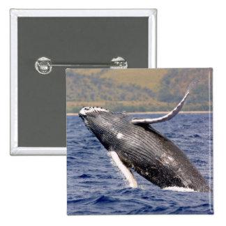 El salpicar de la ballena jorobada pins