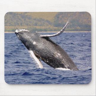 El salpicar de la ballena jorobada alfombrilla de ratones