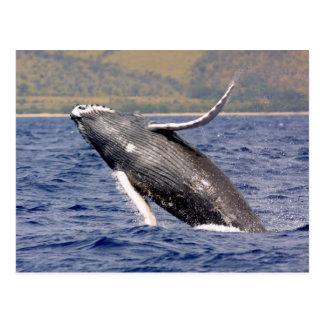 El salpicar de la ballena jorobada postales