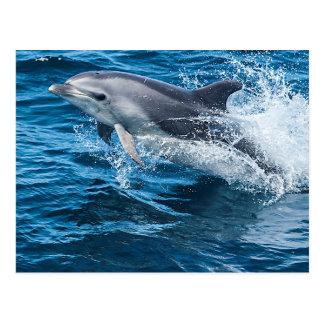 El salpicar del delfín tarjeta postal
