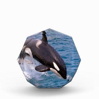 El saltar de la orca del agua