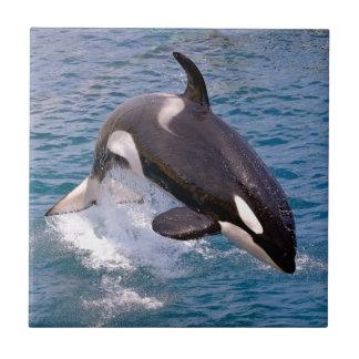 El saltar de la orca del agua azulejo cuadrado pequeño