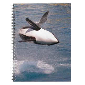 El saltar de la orca del agua spiral notebook