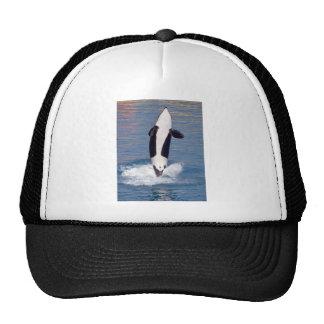 El saltar de la orca del agua gorra