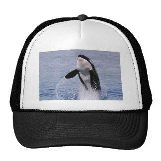 El saltar de la orca del agua gorras