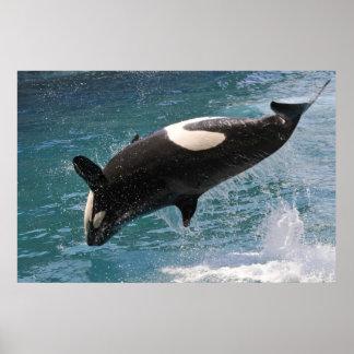 El saltar de la orca del agua póster