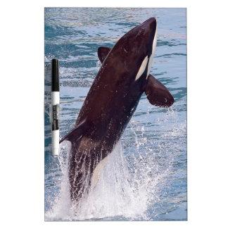 El saltar de la orca del agua pizarra