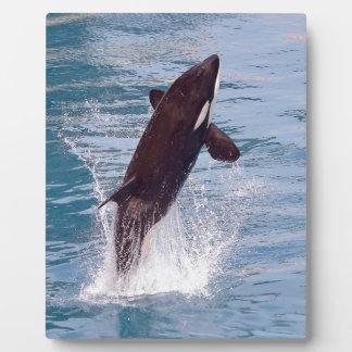 El saltar de la orca del agua placa