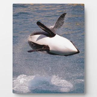 El saltar de la orca del agua placas con fotos