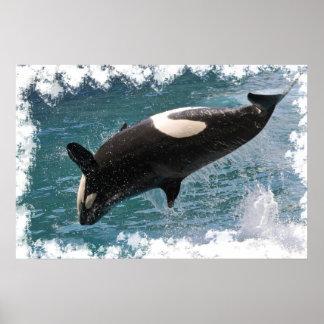 El saltar de la orca del agua poster