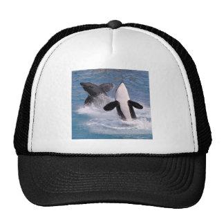 El saltar de las orcas del agua gorra