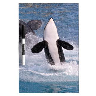 El saltar de las orcas del agua pizarras blancas