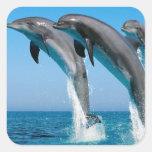 el saltar de los delfínes de bottlenose del mar az calcomania cuadradas
