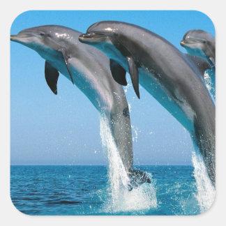 el saltar de los delfínes de bottlenose del mar pegatina cuadrada