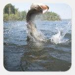 El saltar del lucio europeo del agua en un lago colcomanias cuadradases