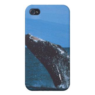 El salto de la ballena jorobada iPhone 4/4S funda