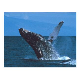 El salto de la ballena jorobada postal