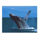 El salto de la ballena jorobada tarjetas postales