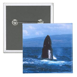 El salto de las ballenas jorobadas pin