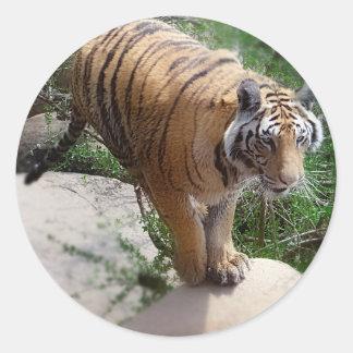 El salto del tigre pegatina redonda
