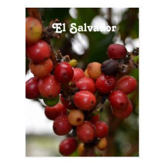 El Salvador Coffee Beans Postcard