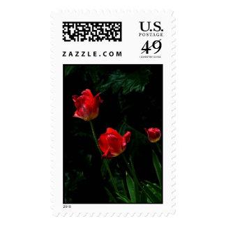 El sello cree color alto de 3 tulipanes