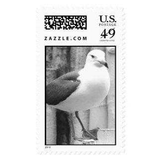 El sello cree el pájaro 2