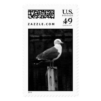 El sello cree el pájaro 3 BW
