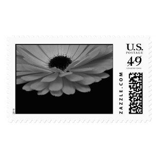 El sello cree la flor cubierta descenso BW de la