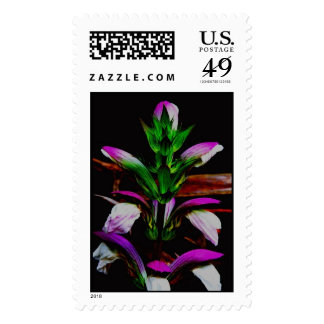 El sello cree mollis del Acanthus