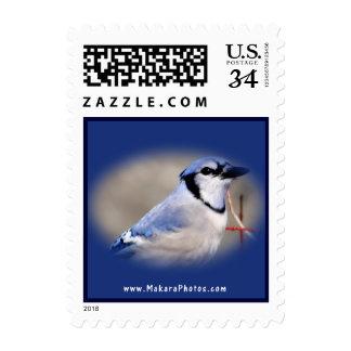 El sello del arrendajo azul 8979 personaliza