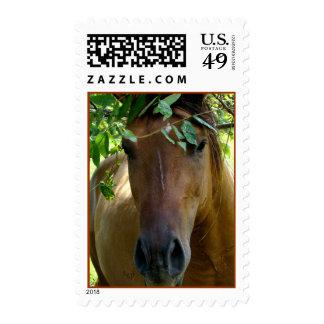 El sello del caballo de Brown personaliza