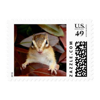el sello del chipmunk
